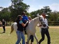 #BeautifulNews: Sometimes horses make the best doctors
