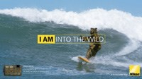 'Camo Bear' launches new Nikon Coolpix AW100