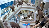 Egg turns shopping centre into a jungle for bidorbuy