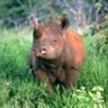 Footprints of Hope walking safari challenge: Saving the rhino, one step at a time