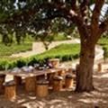 Take a creative wine safari