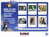 Bobtail and 34 launch top dog search
