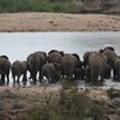 Hotel in Kruger Park irks conservationists