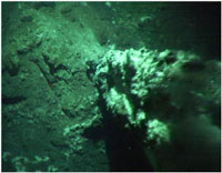 The image, taken by SHRIMP, shows the small relict chimney (around two meters high) found on the seafloor at Hook Ridge at a depth of around 1,200 meters. Emanating hydrothermal fluid is visible as shimmering water. Image courtesy of the National Oceanography Centre, Southampton.