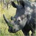#iam4rhinos campaign takes Twitter by storm