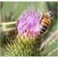 Diesel fumes baffle bees says study