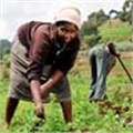 Fast-track fund for food security