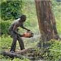 Google-backed database steps up fight on deforestation