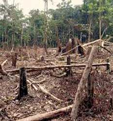 Google has launched an application to monitor levels of deforestation around the world. Image: