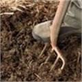 FAO, EU help Zimbabwe's farmers expand productivity