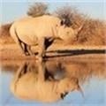Legalising rhino horn trade is too risky
