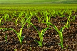 Cooperatives benefit from agro-processing initiative