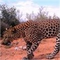 #ChangeYourSpots with Bridgestone and the Cape Leopard Trust