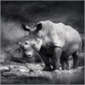 Rhino Project wins Mail & Guardian Greening Award