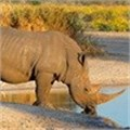 Rhino conservation gets support from Prince Albert II
