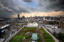 Brooklyn Grange urban rooftop farm. (Source: )