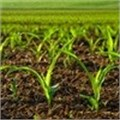 Nedbank's partnerships with farmers are focused on holistic solutions