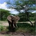 IFAW exposes illegal wildlife cybertrade