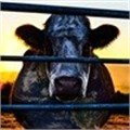 Cowspiracy - ignoring the 'cow' in the room