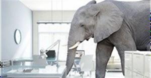 The elephant in the SAARF boardroom