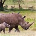WESSA voices strong concerns against rhino horn trade