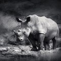 Entries open for 2015 Rhino Conservation Awards