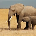 Ivory and rhino horn seized in Mozambique
