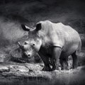 The trouble with using synthetic rhino horn to stop poaching