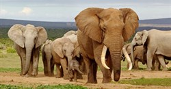 Mozambique destroys over two tonnes of contraband ivory, rhino horn