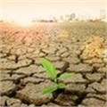 Despite recent rainfall, drought remains severe in KZN