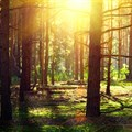 Slow forest drought recovery may boost climate change: study