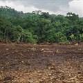 Amazon slowly eaten away by gold rush's illegal mines