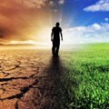 CEOs react to climate change based on cost efficiency, risk management