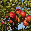 Ceres Fruit Growers, union set to return to negotiation table