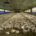 US senators concerned with SA's failure to meet US Poultry imports deadline