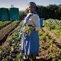 Rural Development and Land Reform approves land for farm workers, agriculture graduates, youth, and women