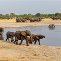 Wildlife and bioprospecting sectors committed to greater inclusivity