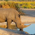 Govt to appeal judgment on rhino horn trade