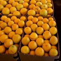 Syria to export 700,000 tons of citrus to Russia: official