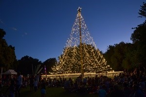 HospiceWits Tree of Light delights 1,200 people of all ages