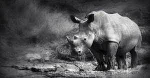 Rhino poaching figures stabilise - DEA