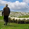 Don't be a sheep... © Dalibor Sevaljevic –