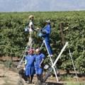 New deal to benefit De Doorns farm workers