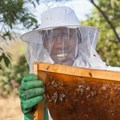 Joint partnership to create Young Entrepreneurs in Silk and Honey