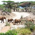 Conservation can competitively stimulate development