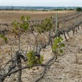 State dragging feet over drought aid in Western Cape - DA