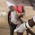 #AfricaMonth: Botswana set to meet Aids viral suppression targets