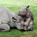 Nominations open for Rhino Conservation Awards 2016
