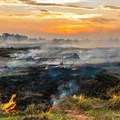 Farmers must plan for veld fire risk during dry winter months