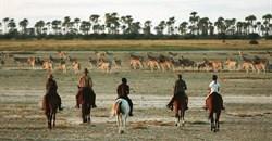 Ten reasons why you should explore the Makgadikgadi Pans